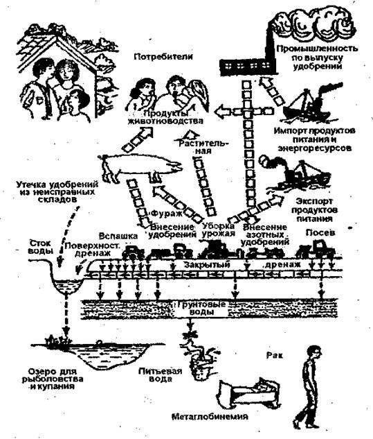 Влияние экологии на акселерацию